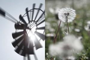 Webecco Fleurs